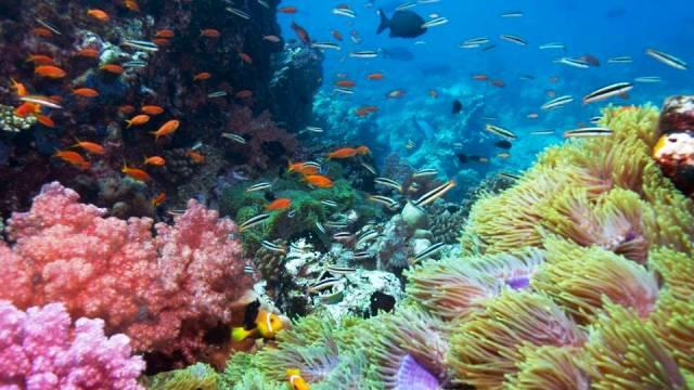ท่องเที่ยว, แนวหินปะการัง, มัลดีฟส์, สถานที่ดำน้ำ, สถานดำน้ำทั่วโลก, อันดับสถานที่ดำน้ำ, ไคลัวร์ โคน่า ฮาวาย (Kailua Kona, Hawaii)