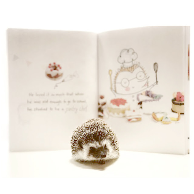 Iggie's Gingerbread is Hedgehog Approved | Mr. Bates the Hedgie enjoys a good read ;) | Photo Credit - @MrBatestheHedgie