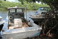 Entre los manglares