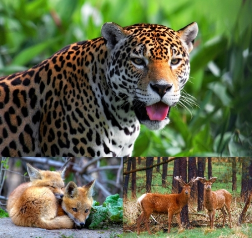 multi animals wallpapers