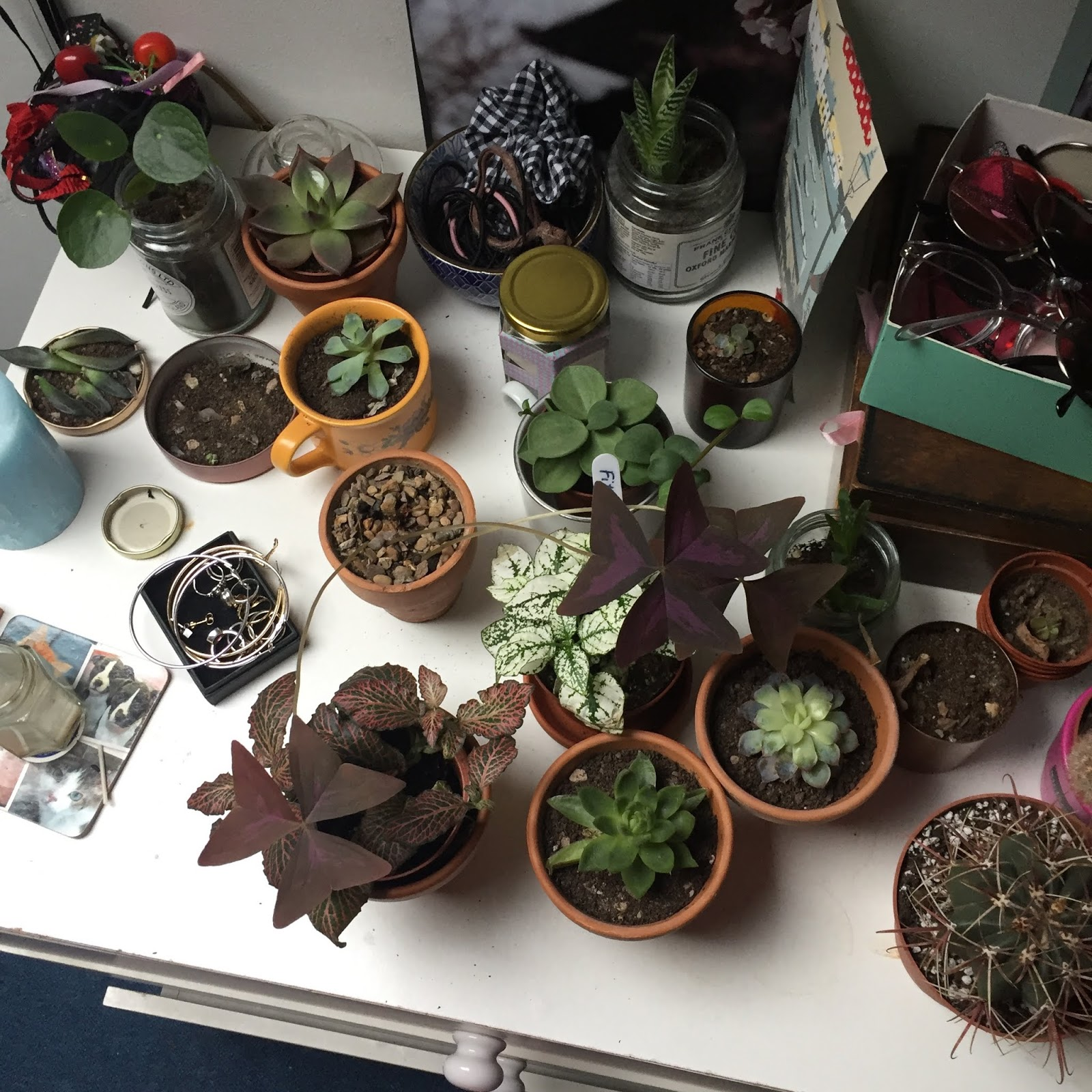 My plant family- small plants on a shelf