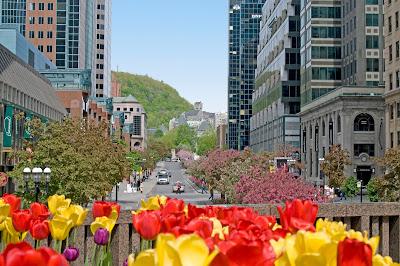 23 actividades familiares para disfrutar al máximo del mes de mayo en Montreal