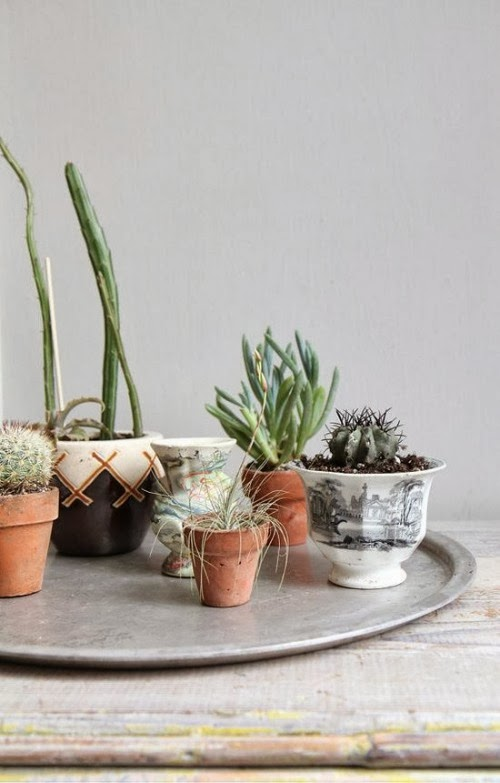 cactus-deco-decor-decoration-inspiration-home-casa-diyearte-diy