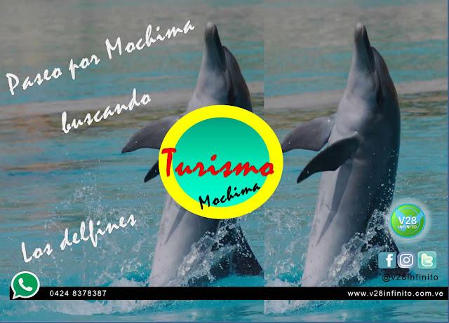 imagen Delfines en mochima tours