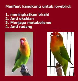 Manfaat kangkung untuk lovebird