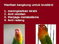 Manfaat Kangkung Untuk Lovebird: Meningkatkan Birahi Lovebird