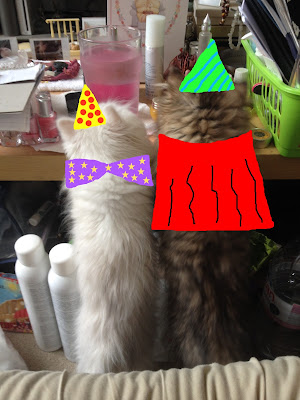 Persian Cat Party