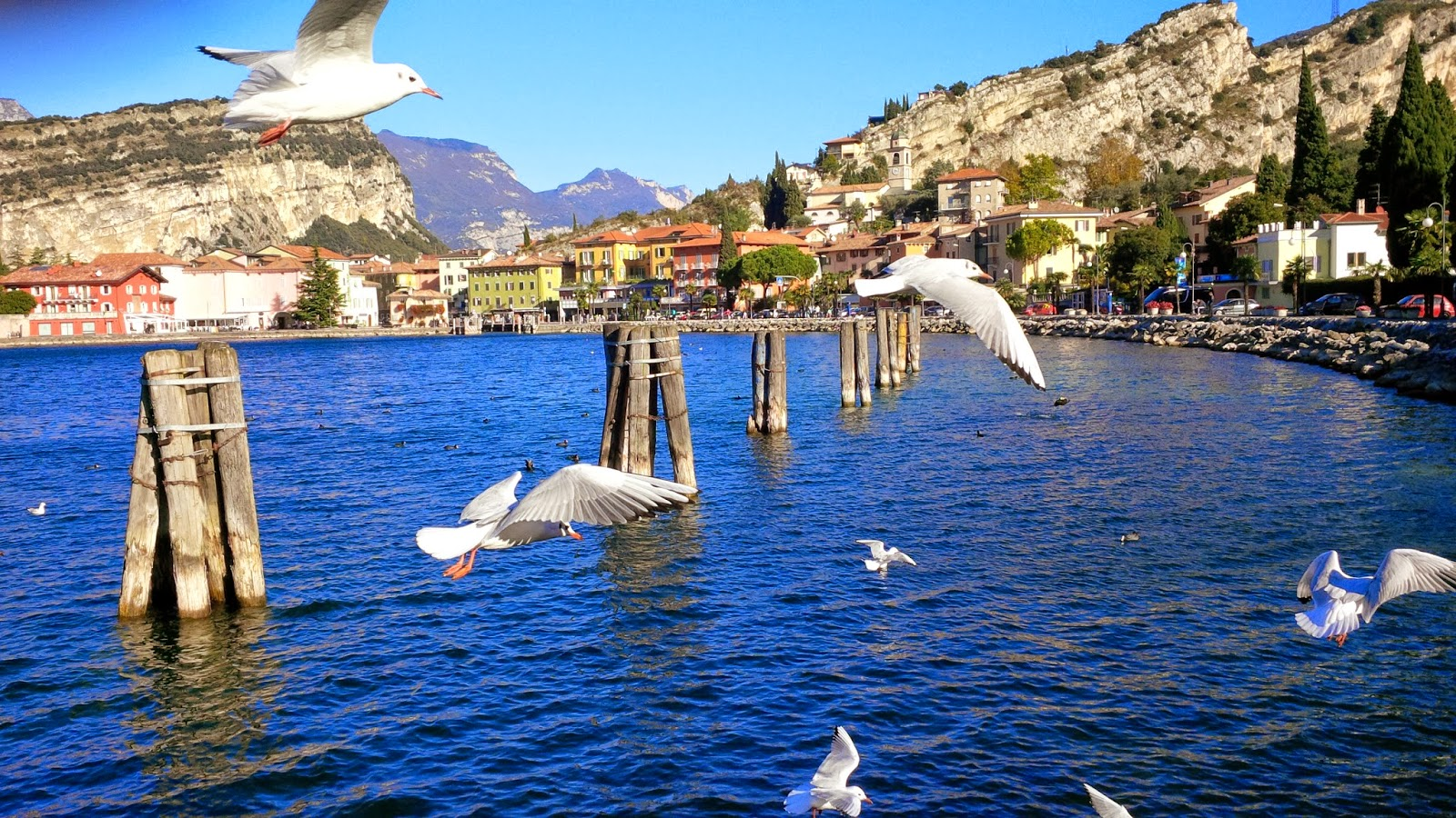 Feeding the seagulls and ducks at Torbole 2