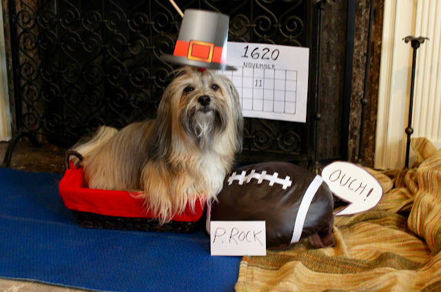 Rocco Havanese #dogthanking