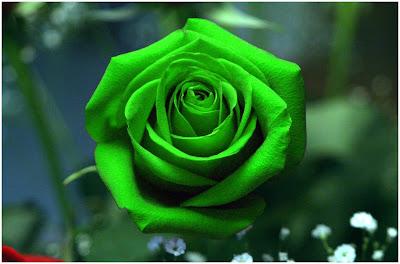 صور خلفيات زهور خضراء