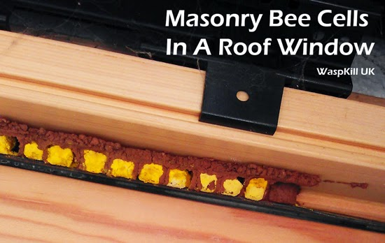 Masonry Bees In Window Frames