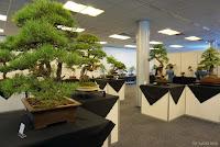 wystawa drzewek bonsai