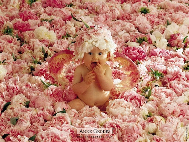 foto de beba dentro de Flores de Anne Geddes