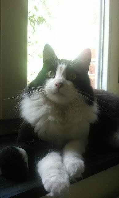 mon-chat-lemmy