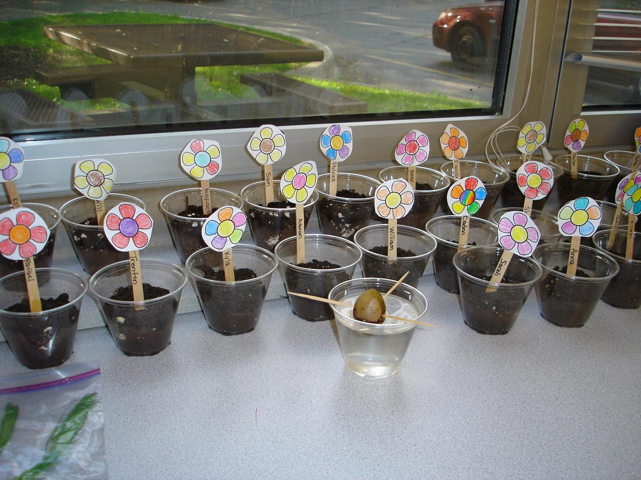Tori S Teacher Tips Flowers In Bloom