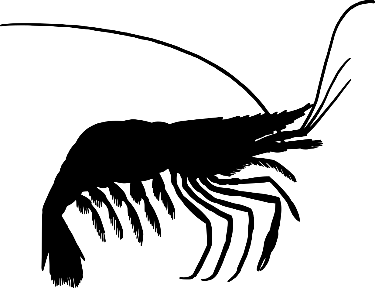 Prawn Vector Images (over 4 )
