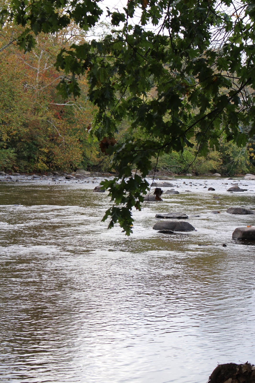 This is a beautiful view of the Brandywine Park river.