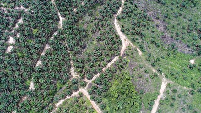 Korporasi Pelaku Kejahatan Lingkungan Bakal Dijerat Pidana Berlapis