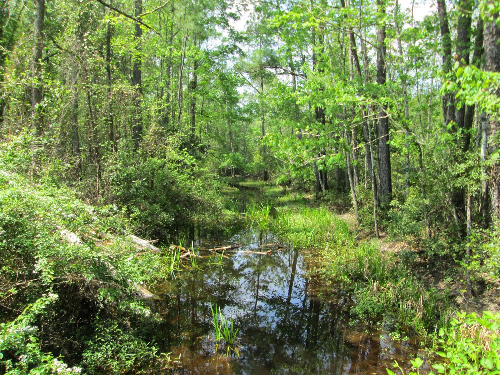 Seaton Creek Historic Preserve, Lace up and walk