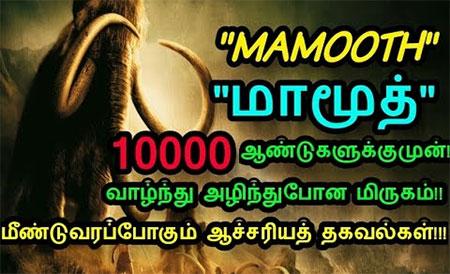 History of Mammot