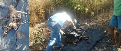 Ossada Humana e moto roubada são encontradas em Chapadinha.