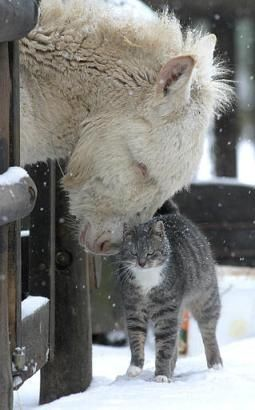 Beautiful winter scene with mule and cat in snow