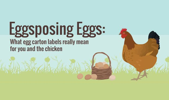 Eggsposing Eggs What Egg Carton Labels Really Mean for You and the Chicken