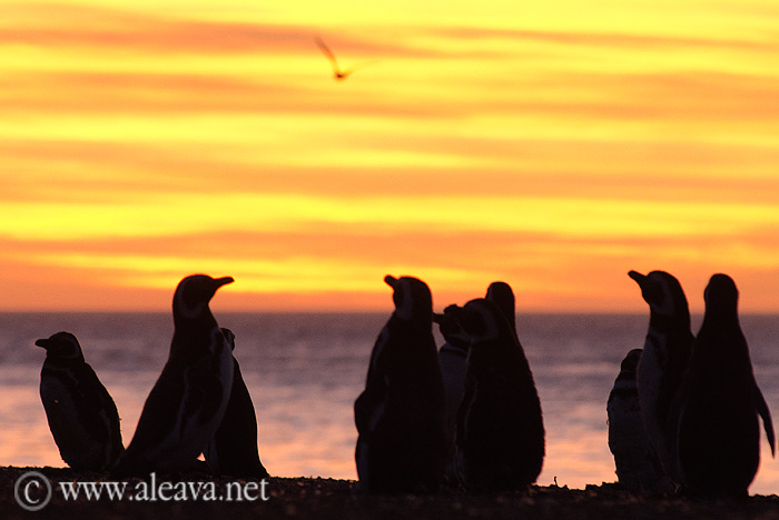 pingüinos en Península Valdés, San Lorenzo al atardecer