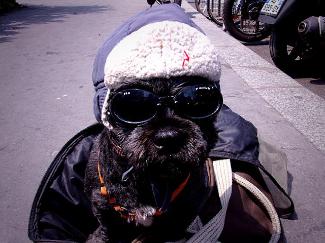 chien habillé avec un bonnet sur la tête