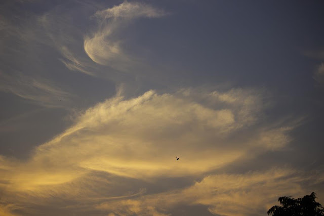skywatch, sky, clouds, bandra east, mumbai, india, bird, dusk, evening,