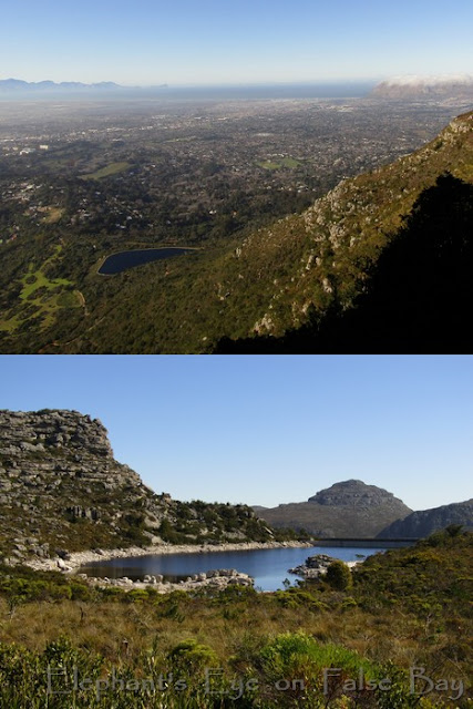 Looking down to Kirstenbosch dam and across De Villiers dam on Table Mountain