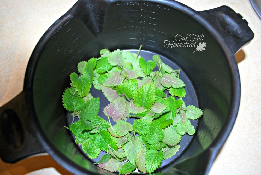 Lay herb leaves in a single layer and let them dry for several days.