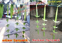 Image result for தோரணம்