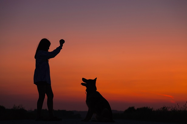 fotografia-de-mascotas-animales-domesticos