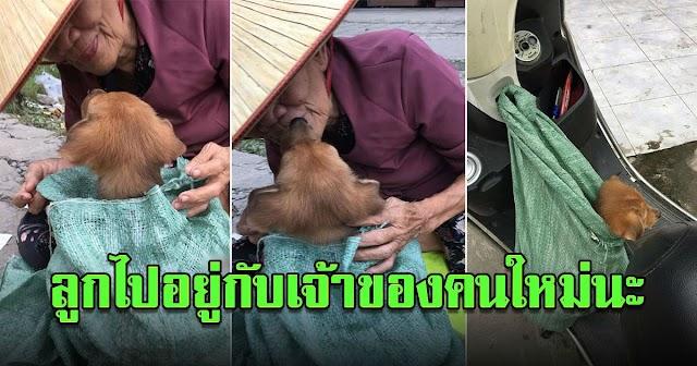 ลูกไปอยู่กับเจ้าของคนใหม่นะ สาวน้ำตาคลอ จำใจซื้อลูกหมากับคุณยาย หลังรู้เหตุจำเป็น ที่ยายต้องนำมันมาขาย!!!(รายละเอียด)