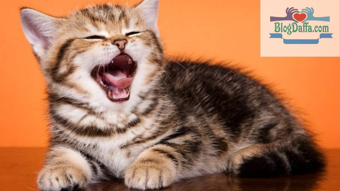 Kucing Sering Mengeong