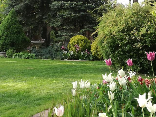 tulipany, kamienne poidło