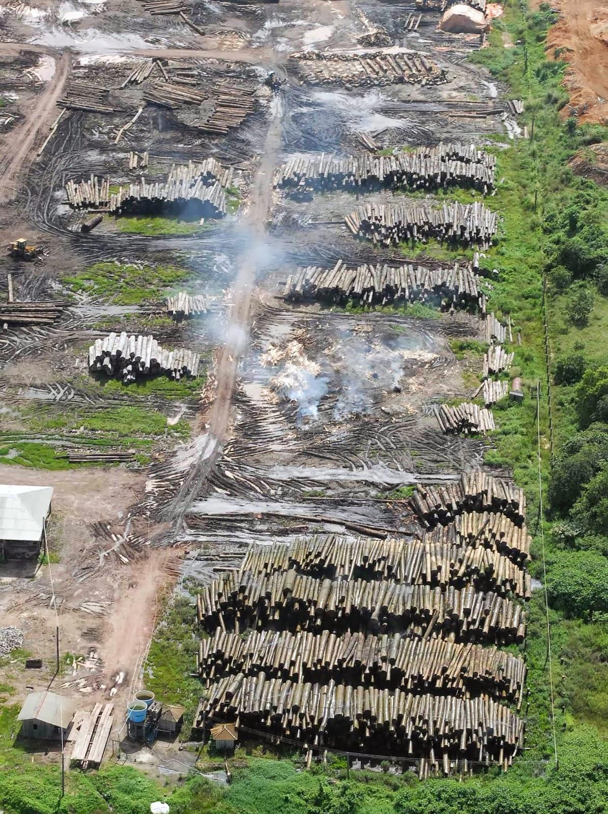 Amazônia Poderá Perder 70% de Cobertura Vegetal Até 2100