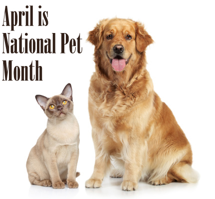 VCA Hollywood Animal Hospital: April is National Pet Month
