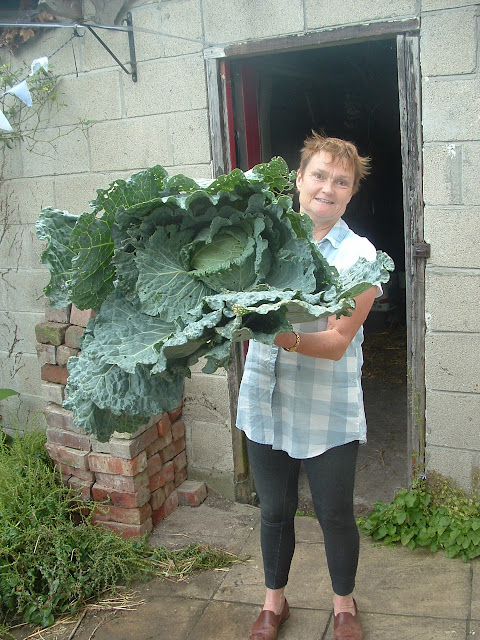 A woman holding a giant Savoy cabbage