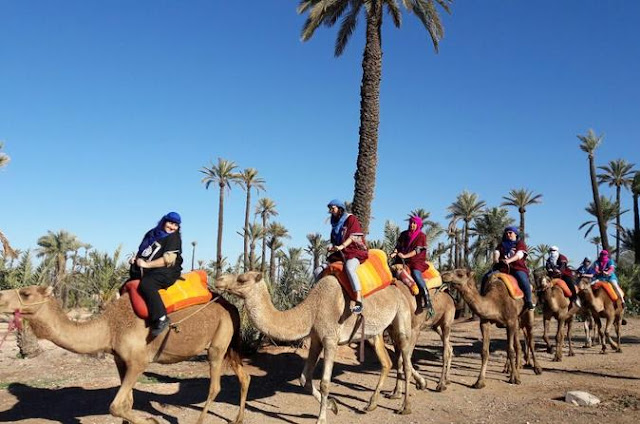 """marrakech tours"";""camel ride morocco"";""camel riding near me"";""sunset camel ride marrakech""; ""marrakech camel trek overnight"";""what to wear on a camel ride in morocco"";""viator camel ride marrakech""; ""camel ride and quad bike marrakech""; ""palm grove marrakech"";""atlas mountain day trip marrakech"";""sunset camel ride marrakech"";""camel excursions morocco"";""marrakech camel trekking"";""dunes and desert"";""ait benhaddou day trip from marrakech"";""marrakech camel trek overnight"";""camel ride marrakech palmeraie"";""what to wear on a camel ride in morocco"";""camel ride palm grove marrakech"";""palm grove camel ride marrakech"";""10"";""menara gardens camel rides"";""marrakech camel ride sahara"";""3 day camel trek marrakech"";""camel ride and quad bike marrakech"";""quad biking palm grove marrakech"";""atlas mountains camel ride""; ""marrakech half-day camel ride in palm grove"";""camel trips luxury camp"";""marrakech star wars"";""ouzoud waterfalls tour from marrakech"";""marrakech desert tour essaouira"";""quad and camel marrakech"";""whattodo ma review"";""ouzoud excursion"";""marrakech camel trips review"";""3 days tours from fes to merzouga"";""morocco desert private tour"";""marrakech camel ride desert"" ""marrakech camel ride marrakesh morocco"" ""marrakech camel ride sahara"" ""marrakech camel ride price"" ""marrakech camel ride sunset"" ""marrakech camel ride and dinner"" ""marrakech camel ride 1 day"" ""marrakech camel ride and quad biking"" ""marrakech camel ride marrakesh"" ""marrakech ride a camel"" ""marrakech palmeraie camel ride and quad bike experience"" ""best camel ride marrakech"" ""book camel ride marrakech"" ""camel ride marrakech cost"" ""cheap camel ride marrakech"" ""camel ride excursion marrakech"" ""camel ride from marrakech"" ""camel ride fes to marrakech"" ""camel ride in marrakech"" ""camel ride in marrakech palmeraie"" ""camel ride in marrakech desert"" ""best camel ride in marrakech"" ""sunset camel ride in marrakech"" ""book a camel ride in marrakech"" ""la palmeraie marrakech camel ride"" ""luxury camel ride marrakech"" ""marrakech camel ride marrakech"" ""camel ride near marrakech"" ""camel ride palm grove marrakech"" ""sunset camel ride marrakech tripadvisor"" ""short camel ride marrakech"" ""sunrise camel ride marrakech"" ""marrakech camel ride tripadvisor"" ""marrakech camel ride tour"" ""viator camel ride marrakech"" ""marrakech rock desert and palm grove camel ride with tea"" ""1 hour camel ride marrakech"""