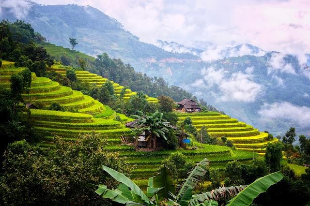 Vietnam is wonderful in ripen rice season