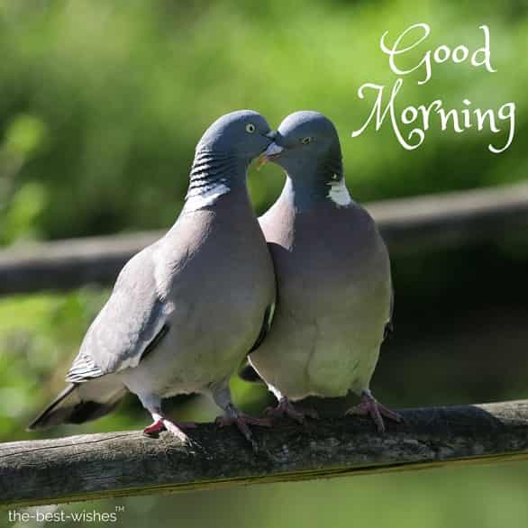 good morning kiss images for lover with love birds