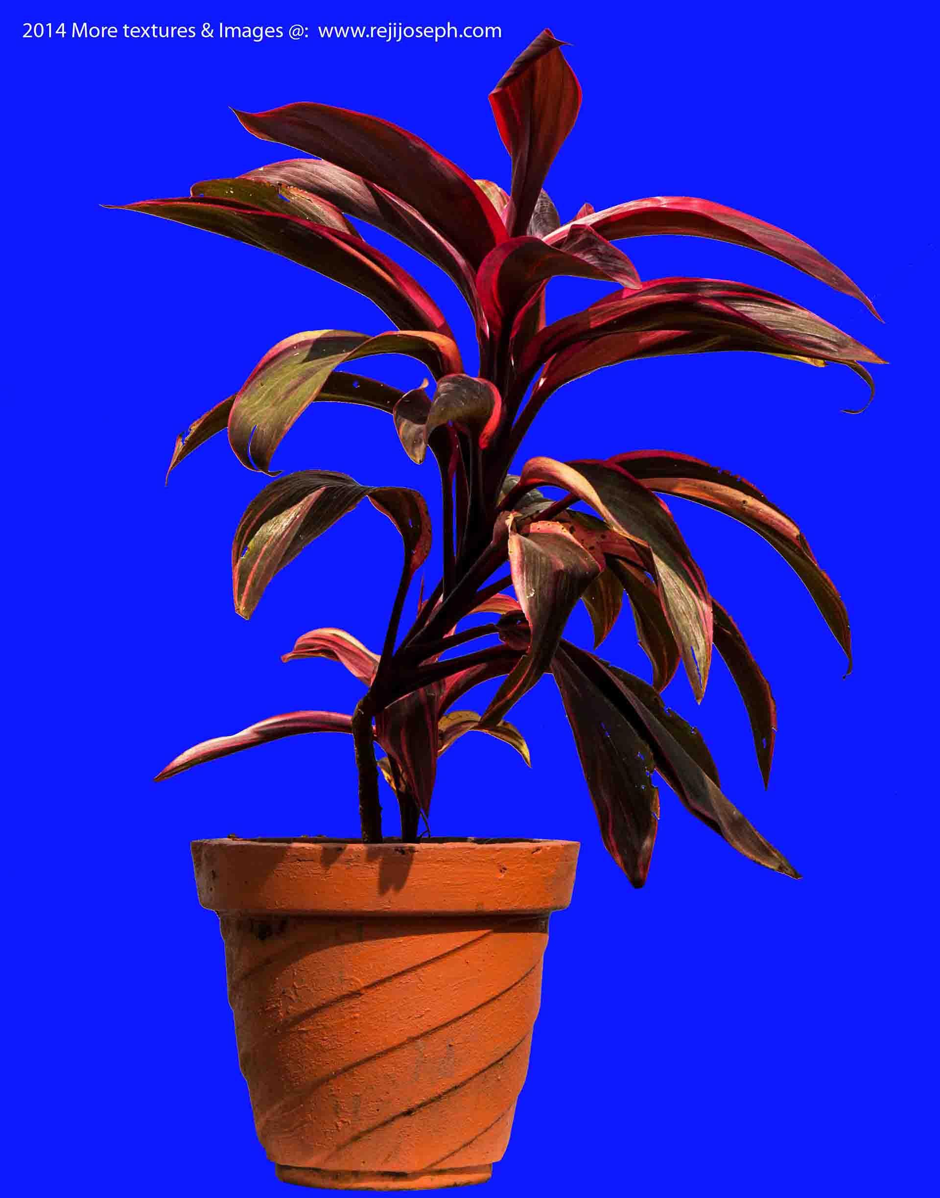 Garden Plant texture 00006