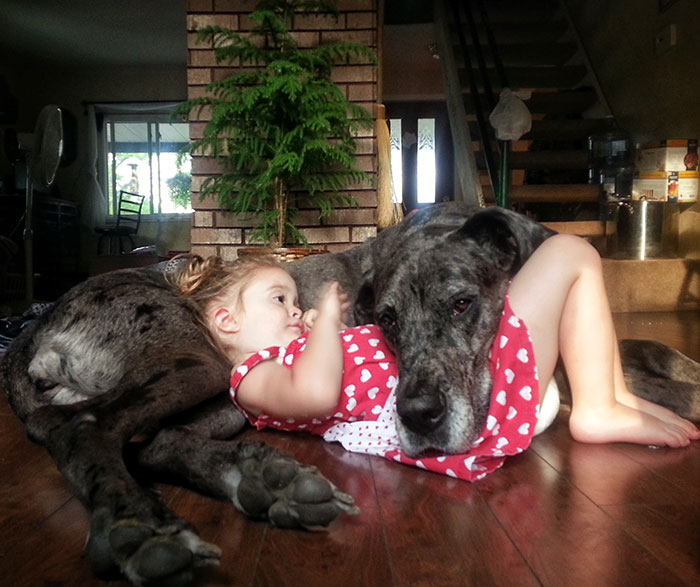 Adorable Pictures Of The Largest Danes We Have Ever Seen