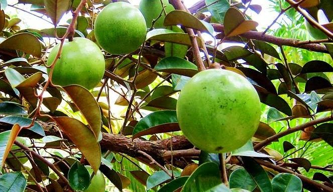 Manfaat Apel Hijau