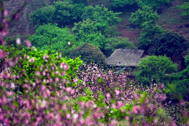 Discovering the scenic beauty of Moc Chau Plateau 3