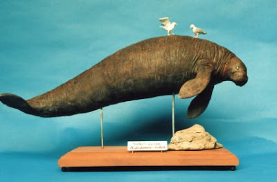 Steller's Sea Cow ( Hydrodamalis gigas) ~ World Extinct ... - photo#16