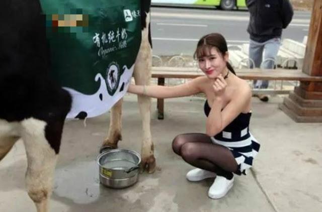 Ups Jangan Gagal Fokus!! Ini Wanita Pemerah Susu dengan Pakaian Wah-nya