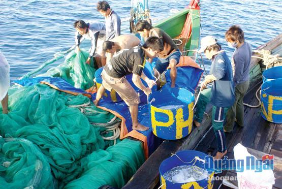 Tuổi trẻ Lý Sơn tích cực tham gia đánh bắt hải sản và góp sức bảo vệ chủ quyền biển đảo Tổ quốc.